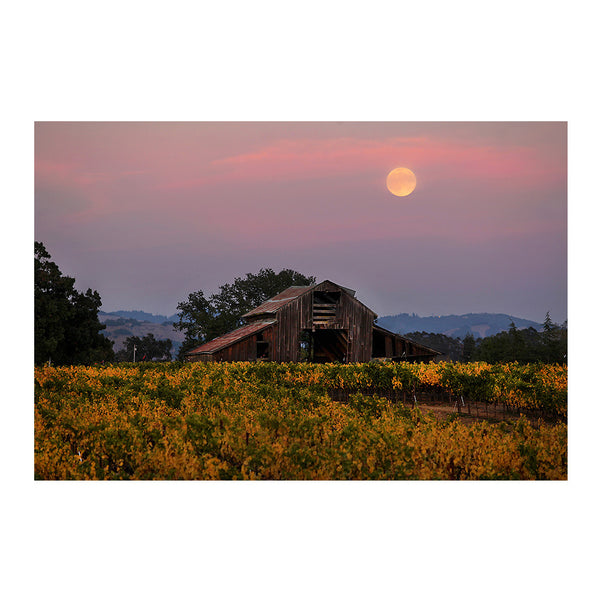 Harvest Moon over Wine Country