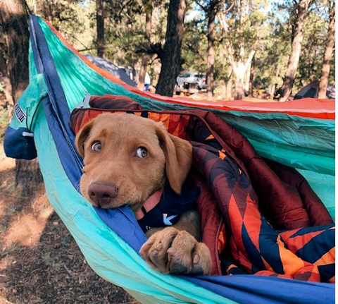 Bear Butt hammock camping with your dog blog