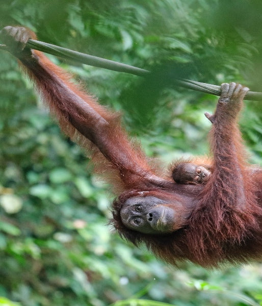 guess who's just been officially certified palm oil free? WE HAVE