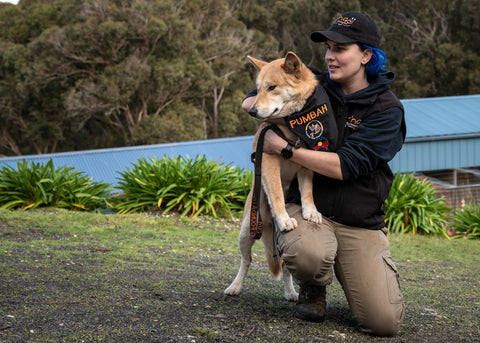 The Australian Dingo Foundation