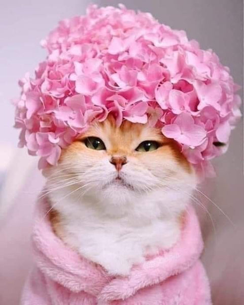 cat flowers pink fashion