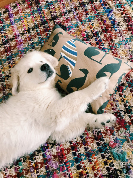 golden retriever puppy and dog cushion greyhound