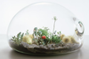 Health Benefits Of Terrariums