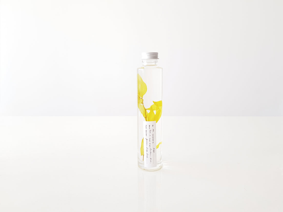 002 Yellow lily leaf - LIMITED EDITION - FAYY Terrarium & Gifts