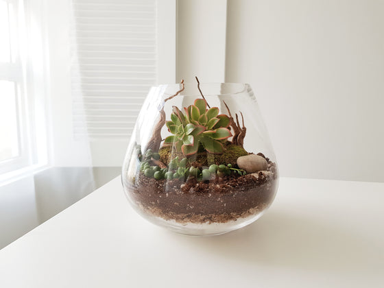 Desert Terrarium Workshop feat. The World of Cacti & Succulents - FAYY Terrarium & Gifts