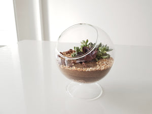 The Moon - FAYY Terrarium & Gifts