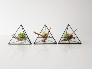 Geometric Air Plant - FAYY Terrarium & Gifts