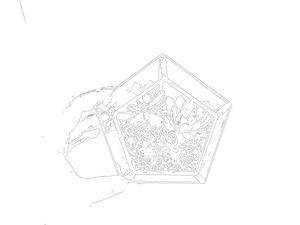 Colouring: Geometric Star - FAYY Terrarium & Gifts