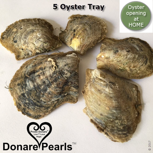 Akoya Pearl Oysters<BR>to open at HOME