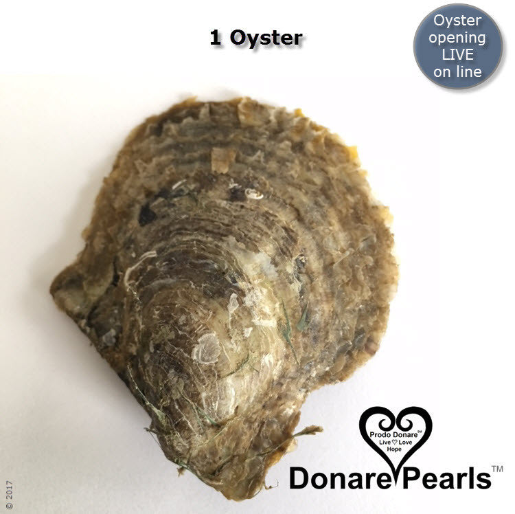 Akoya Pearl Oysters<BR>opened LIVE online
