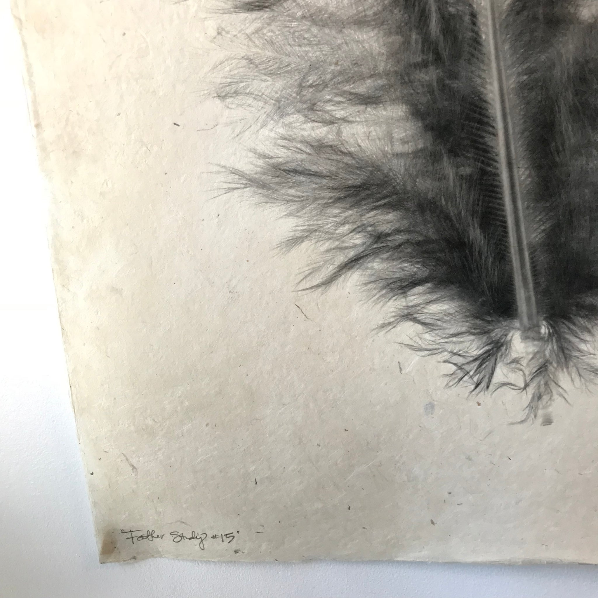 Feather Study Number 15 by Barloga Studios - Upstate MN