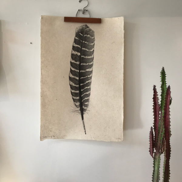 Feather Study Number 16 by Barloga Studios - Upstate MN