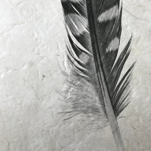 Feather Study Number 12 by Barloga Studios - Upstate MN