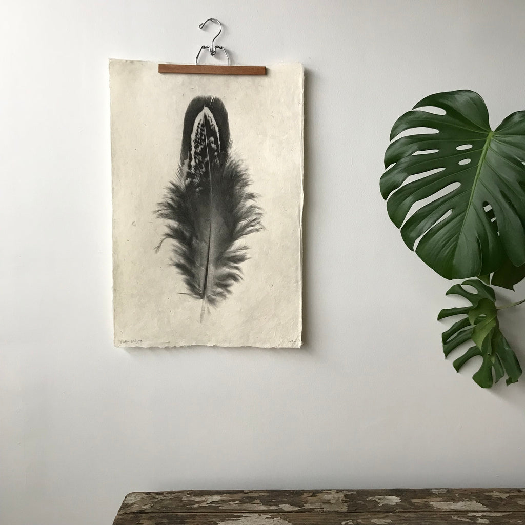 Feather Study Number 3 by Barloga Studios - Upstate MN