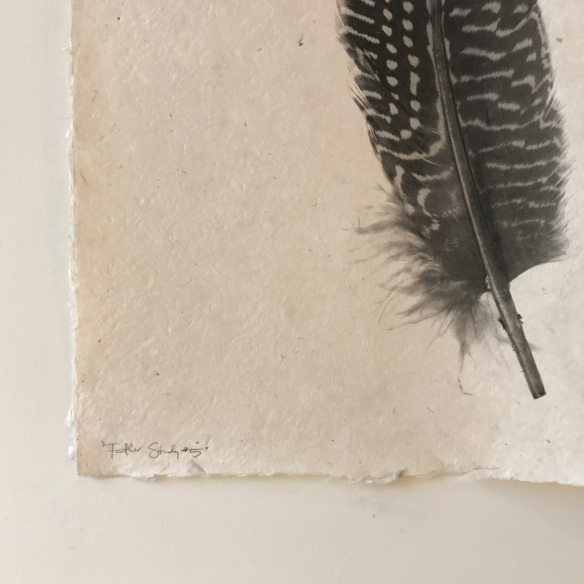 Feather Study Number 5 by Barloga Studios