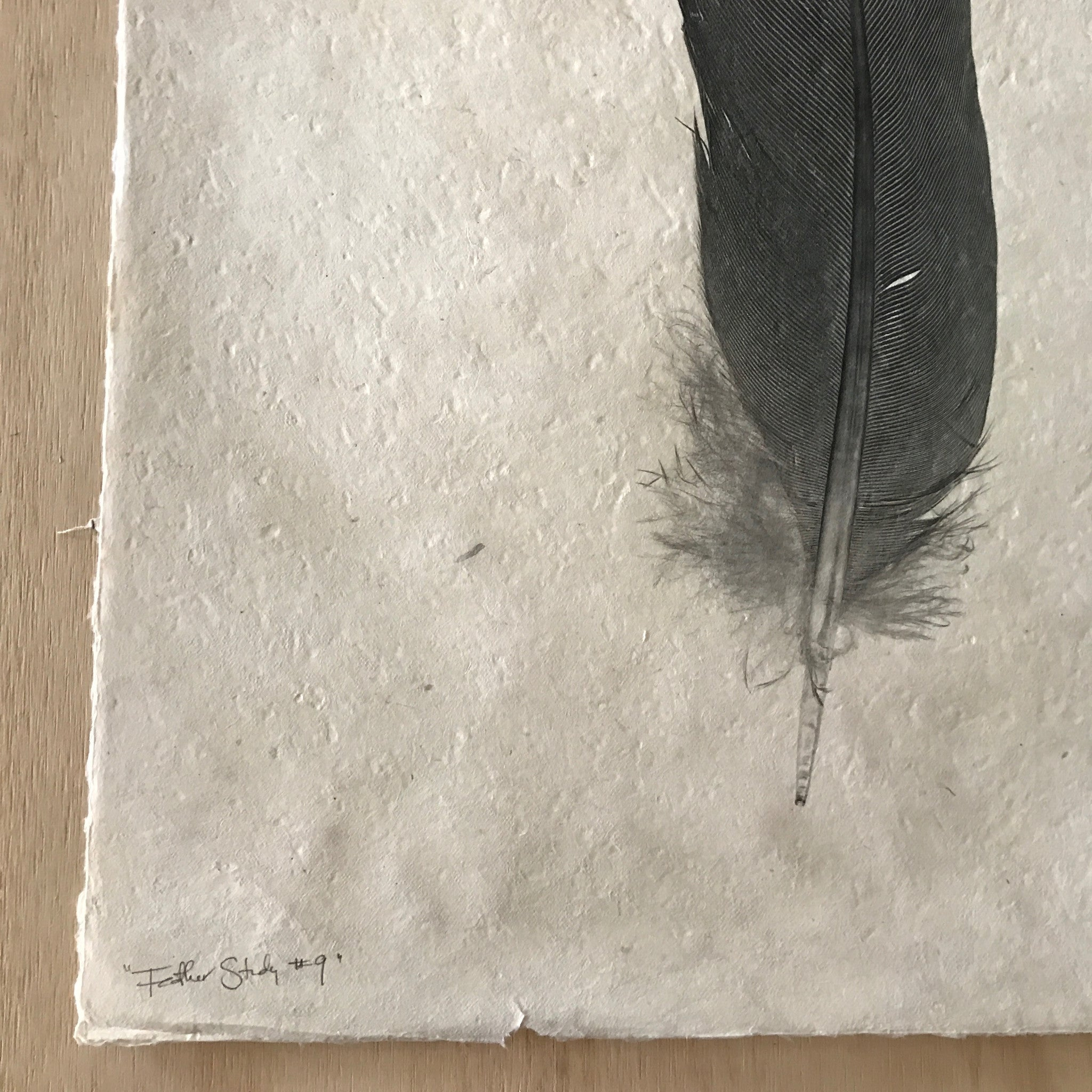 Feather Study Number 9 by Barloga Studios - Upstate MN