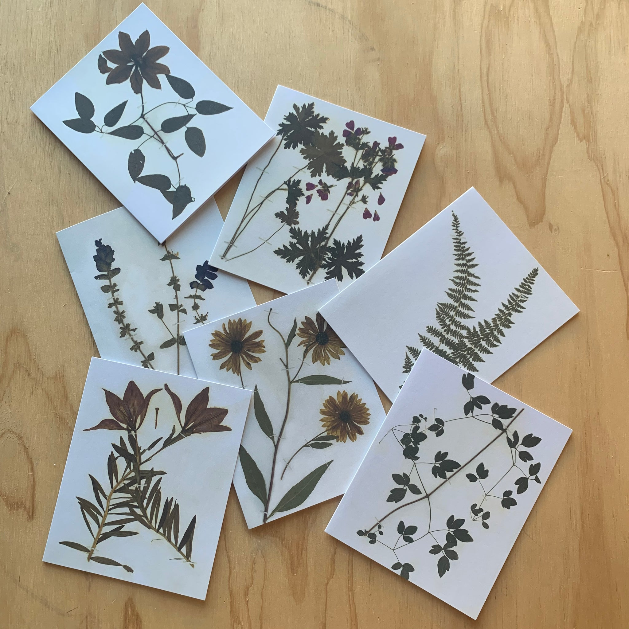 Herbaria: Pressed Plant Collection of Beatrix Farrand