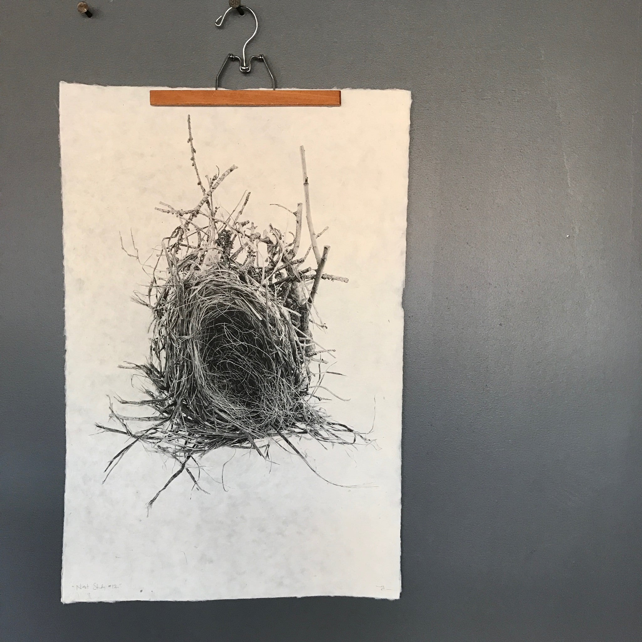 Nest Study Number 12 by Barloga Studios - Upstate MN