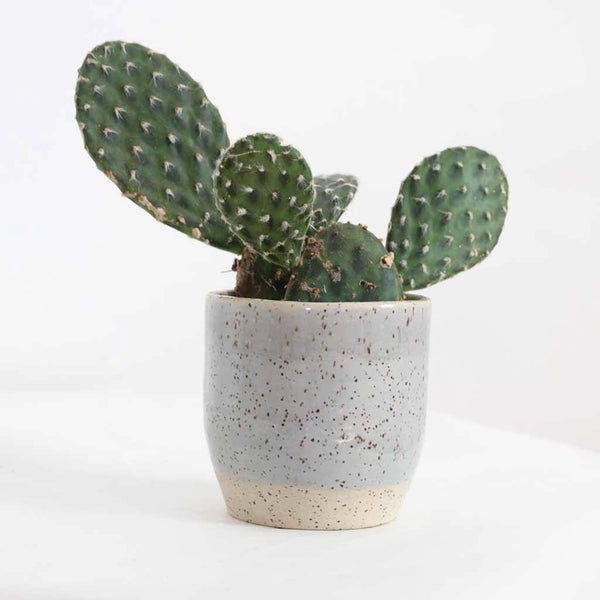 Ceramic Pot in Light Grey