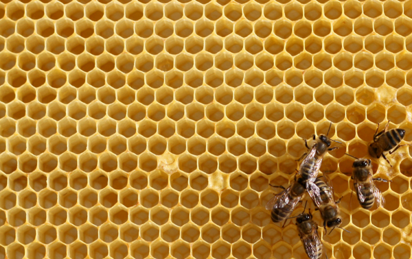 A Sticky Situation: The Buzz About Organic Honey