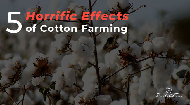 5 Horrific Effects of Cotton Farming