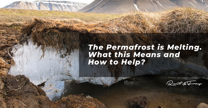 The Permafrost is Melting: What this Means and How to Help
