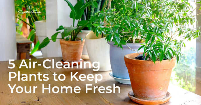 5 Air-Cleaning Plants to Keep Your Home Fresh