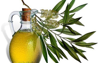 Tea Tree Oil: The beauty ingredient that will get you rid of acne!