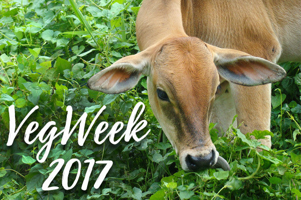 VegWeek Promotes Plant-Based Eating for Seven Days