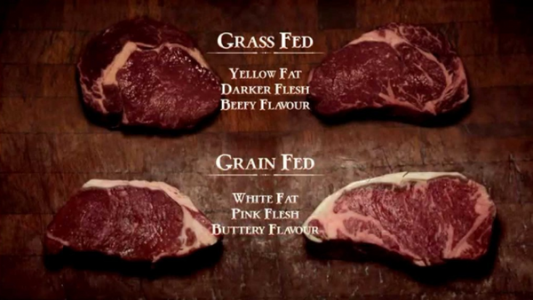 Grass Fed Beef: Is it A Scam?
