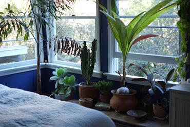 6 Ways To Decorate With Houseplants