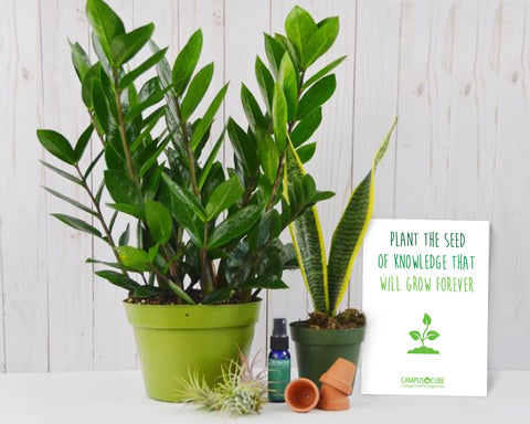 Easy Care House Plant Bundle
