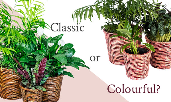 Planters: Classic or Colourful?