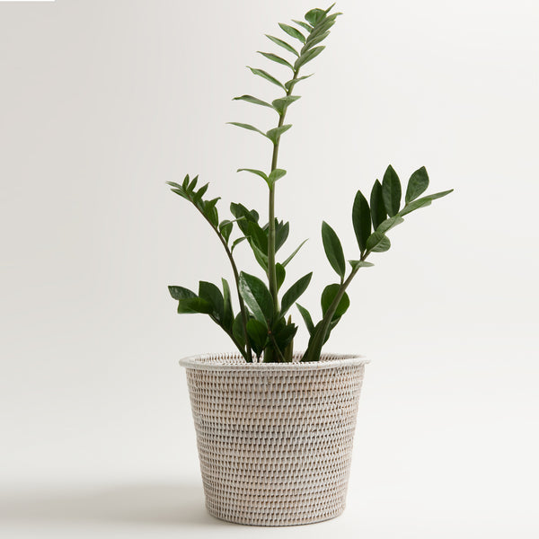 Kanbalu Rattan Planter | 3 Sizes | White