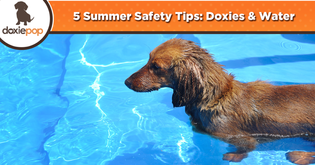 5 Summer Safety Tips: Doxies & Water