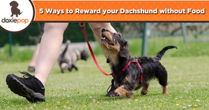 5 Ways to Reward your Dachshund without Food