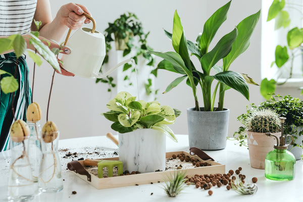 The Beginner's Guide to Houseplants