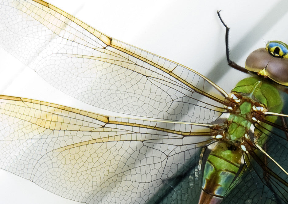 What Are Dragonfly Wings Made Of?