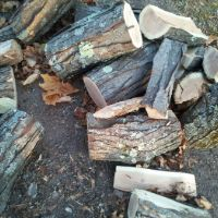 Walnut Wood Logs for Cooking