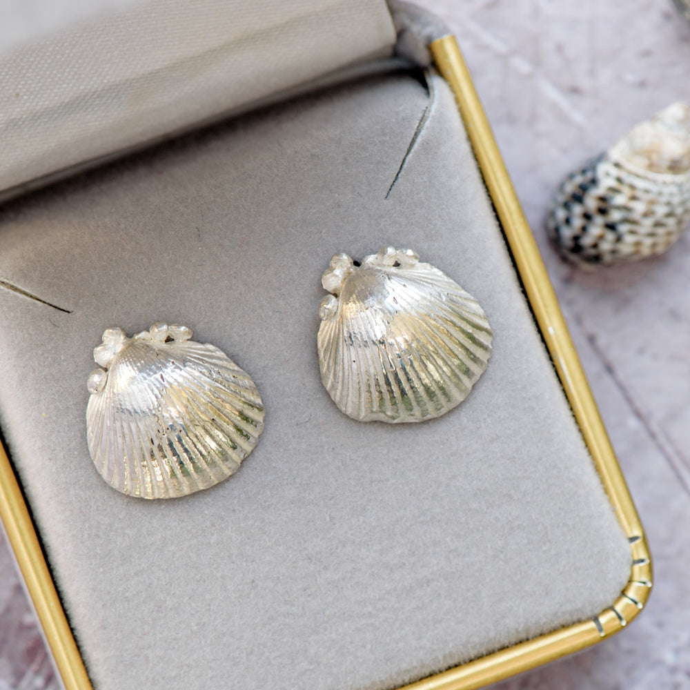 seashell studs, silver shell earrings, cornish shells