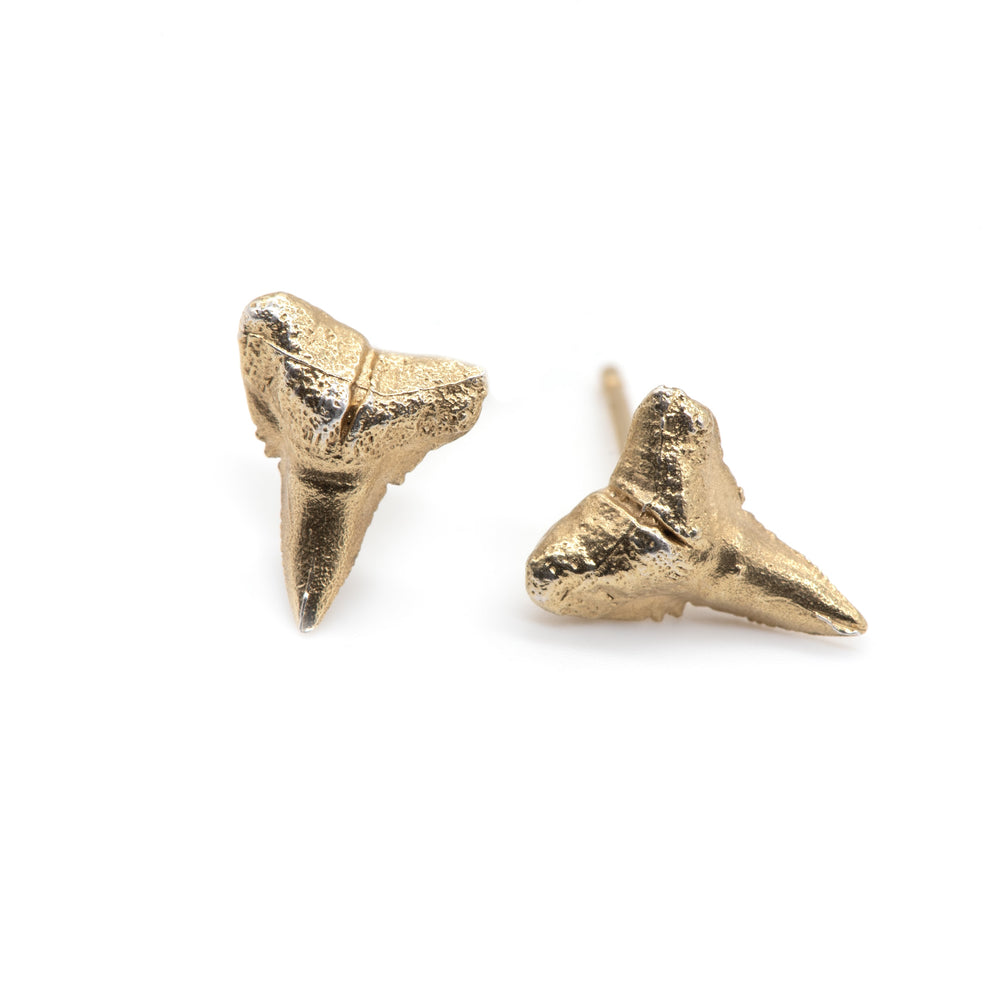 Load image into Gallery viewer, fossilized sharks tooth earrings gold