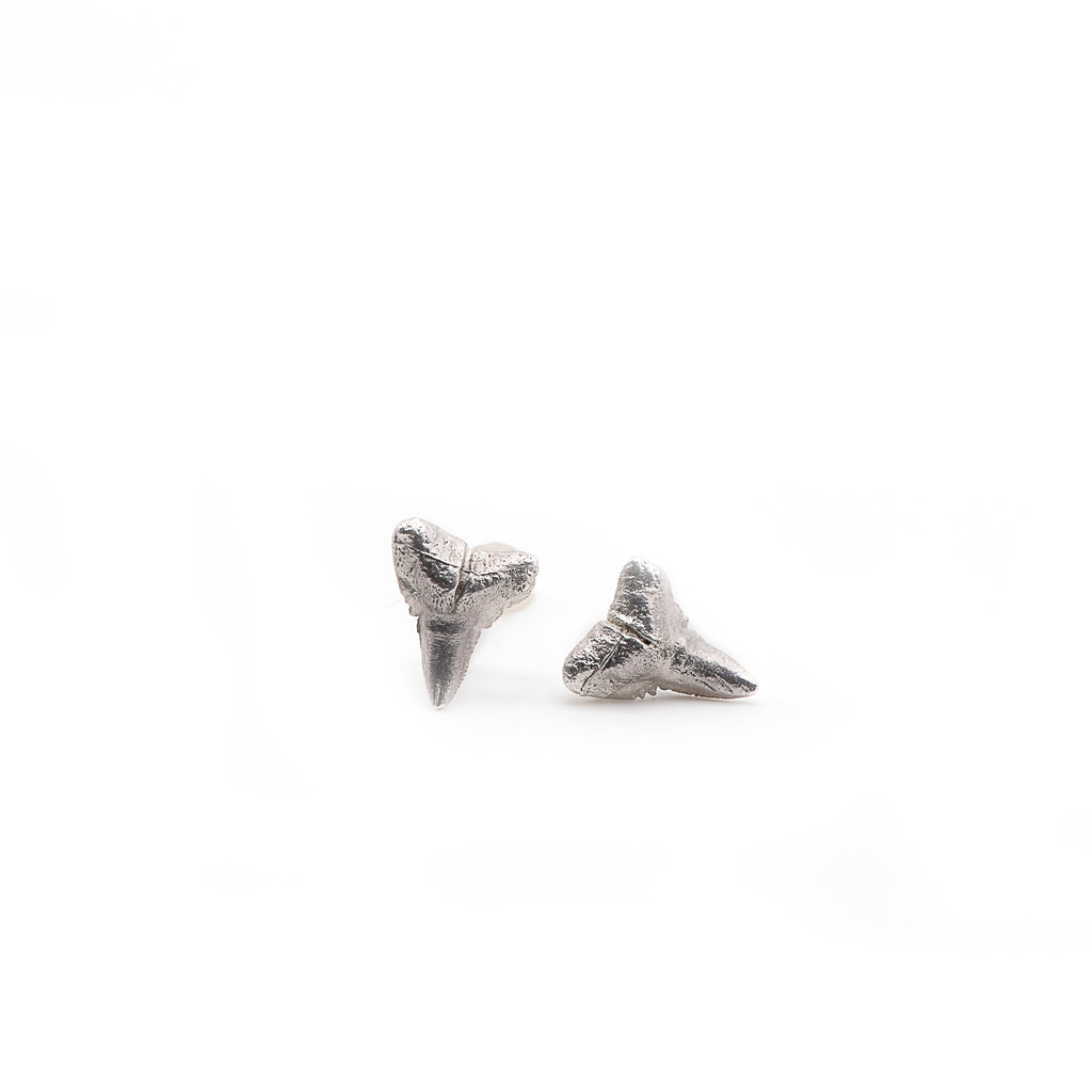Sharks Tooth Studs