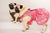 STEP-IN Chinese Girl (XL) DOG HARNESS - GLITTER POOCH DOG & CAT HARNESS
