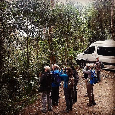 Scheduled Birding Tours in Colombia