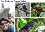 Colombia Nature & Birding Private Expedition (11-Day Roundtrip / price in USD$)-Birding Colombia-Colombia endemic Birds-Birding Colombia Tours
