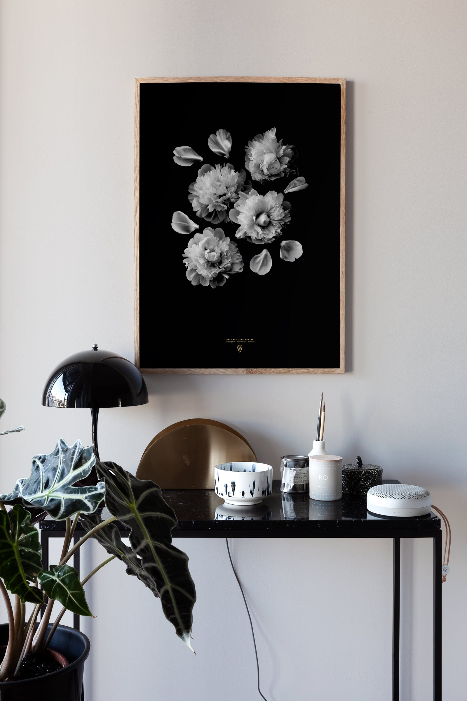 Paeonia Officinalis poster - cocolapine