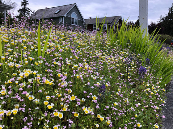 Native Pollinator Seed Mix