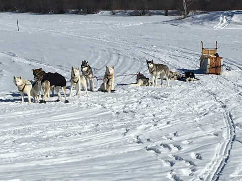 2020 Red River Mêtis Expedition cariole dogsled