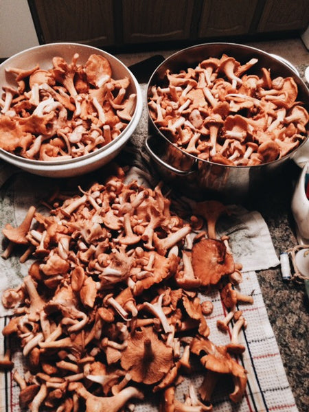 Two metal pots filled with mushrooms beside a pile of chanterelle littering the kitchen counter