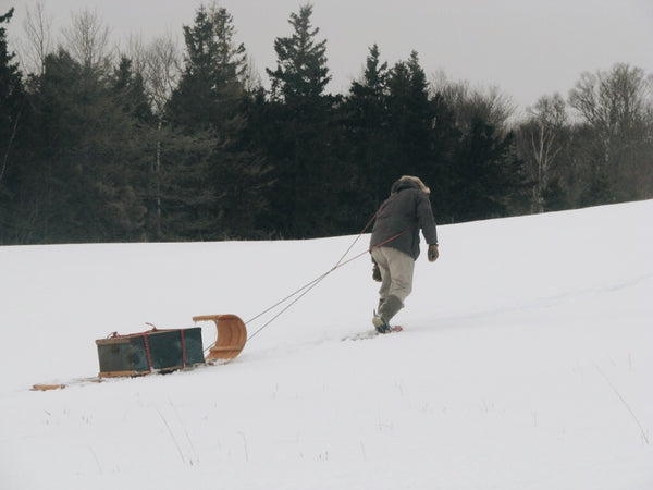 A man walking in the snowy woods, leaning into the weigh of the toboggan he pulls